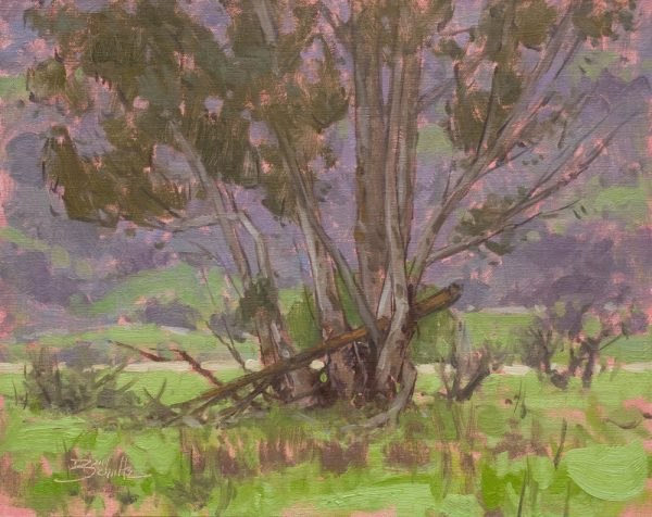 Quiet Eucalyptus • 11x14 inches • Oil on Linen Panel • Available from Dan Schultz Fine Art in Ojai, California