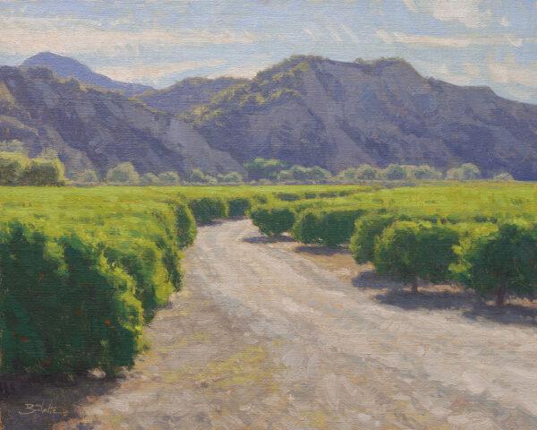 California Citrus • 16x20 inches • Oil on Linen Panel • Available from Dan Schultz Fine Art in Ojai, California